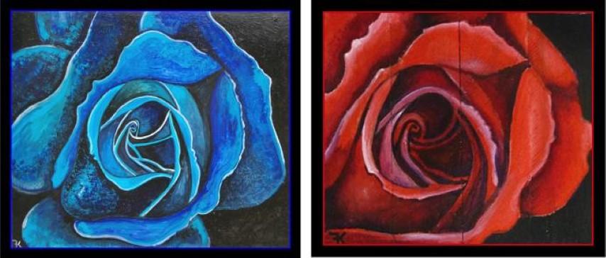 blauwe en rode roos